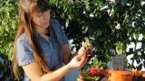 Garden Tower Planting