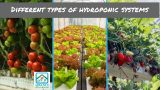 6 Main Types of Hydroponic Systems