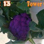 Week 13 Aeroponics Tower Garden