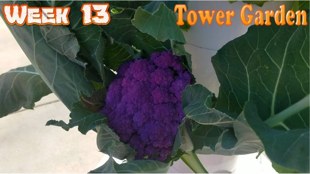 Week 13 Aeroponics Tower Garden