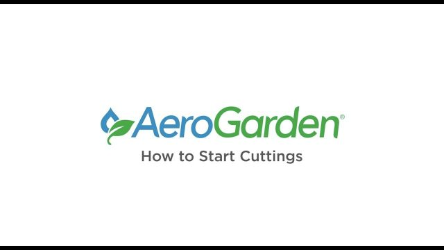How to Start Cuttings – AeroGarden Indoor Gardening Month