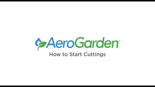 How to Start Cuttings – AeroGarden Indoor Gardening Month