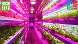 Is This the Future of Agriculture? | FreshBox Farms