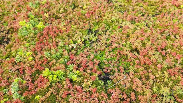 Dachbegrünung günstig selber machen einfach mit Blumenerde