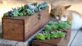 Wine Box Turned Succulent Planter
