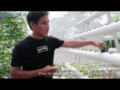 HYDROPONICS EPISODE 1: Vertical A-Frame NFT System | Greengold Farms