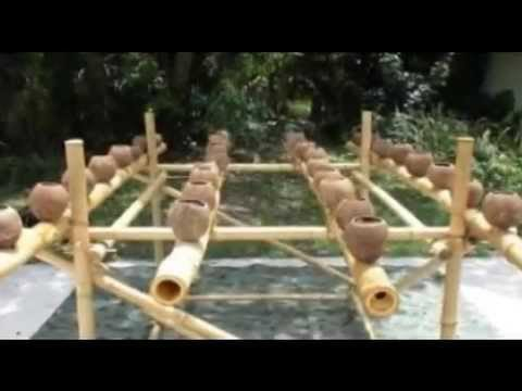 The Hydro Nut Hydroponic Grow System