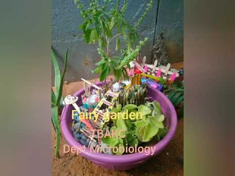 Fairy Garden – Dept of Microbiology, TBAKC