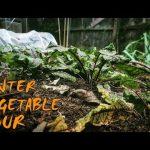 Winter Vegetable Gardening | An Urban Garden Tour
