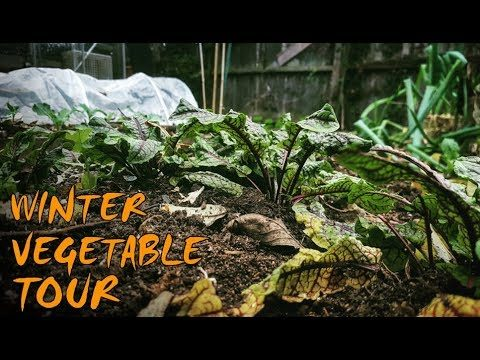 Winter Vegetable Gardening | An Urban Garden Tour