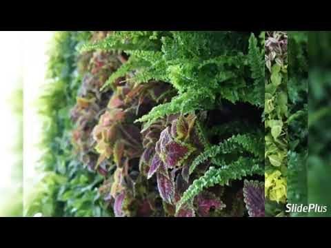 Thai Garden Design – How to Build Amazing Green Vertical Gardens in Thailand