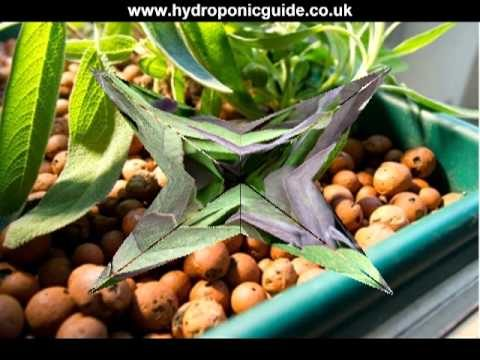 Choosing Grow Lights and Hydroponics Starter Kits Plus Hydroponics Nutrients for Great Results