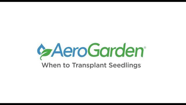 When to Transplant Seedlings – AeroGarden Indoor Gardening Month