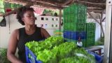 Mwami Mlangwa farms lettuce using hydroponic method in Tanzania