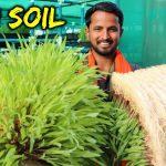 बिना मिट्टी – Organic Farming | 90% पानी की बचत | Hydroponics Farming in India