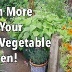Cram More Into Your City Vegetable Garden!