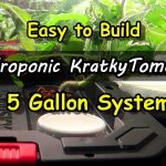 Easy System for Hydroponic Kratky Tomatoes – Indoor Growing