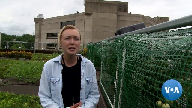 Green Roofs Benefit People, Environment