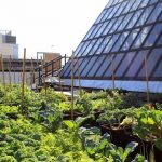 Boston Medical Center Rooftop Farm – Featured Project