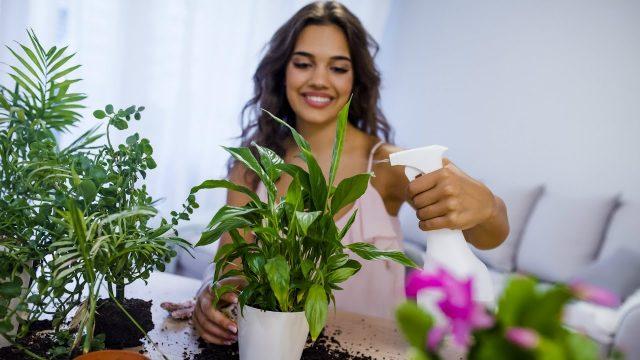 Urban Farming is Trending – Here Are 3 Ways to Grow an Indoor Garden