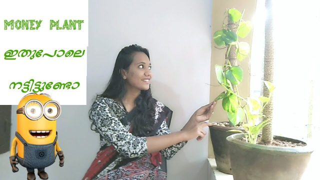 #Moneyplant indoor gardening..|| മണി പ്ലാന്റ് നടാം ?? || #paathalakkarandi