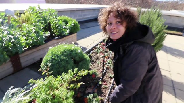 Green Roof Fundamentals: Building an Epic Rooftop Garden 🏠🌱