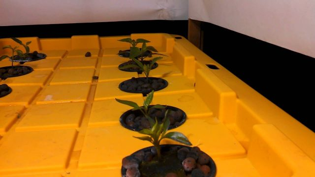 Hydroponics aeroponics system