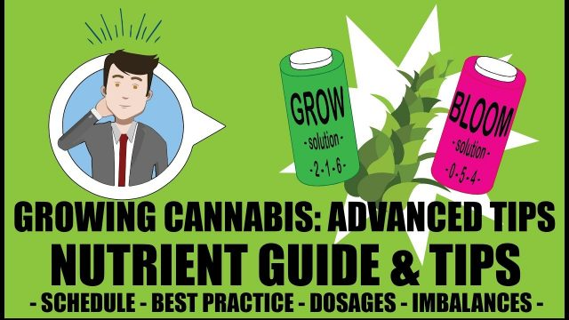 Marijuana Nutrient Guide Schedule Explained – Growing Cannabis 201: Advanced Grow Tips