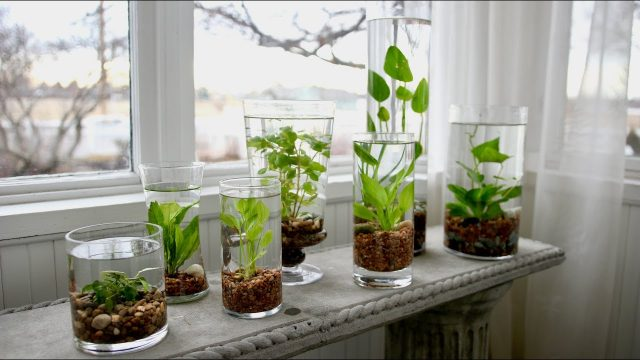 How to Make an Indoor Water Garden! 🌿💦 // Garden Answer