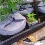 2018 video #11 outdoor hydroponics marijuana grow