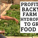 Profitable Backyard Farm uses Hydroponics to Grow Food Fast