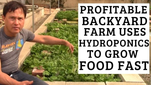 Profitable Backyard Farm uses Hydroponics to Grow Food Fast