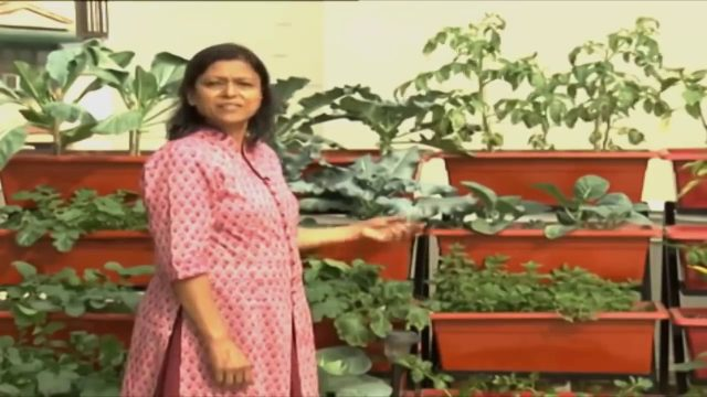 How to Grow Vegetables on Terrace Garden | Chhat Par Bagwani |