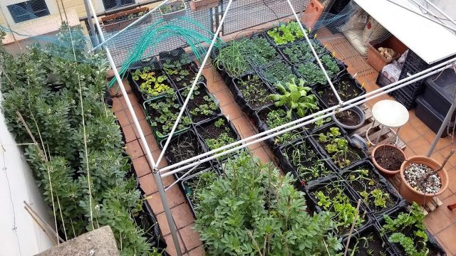 EPIC Rooftop Farming in Spain (Full Tour + Calçot Harvest and Cook)