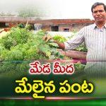 Best Rooftop Garden | All Varieties Of  Fruits &Vegetables Plants on Terrace Garden | hmtv Agri