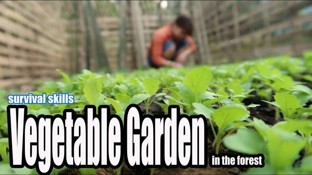 Survival Skills: Grow a Vegetable Garden in the forest, The Best Food to survival
