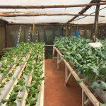 Hydroponics farming system in Kenya – part 1