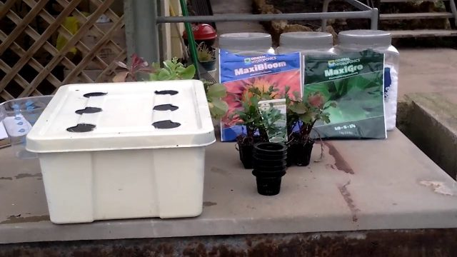 hydroponics Kratky  for Beginners :ORGANIC VEGETABLE GARDENER