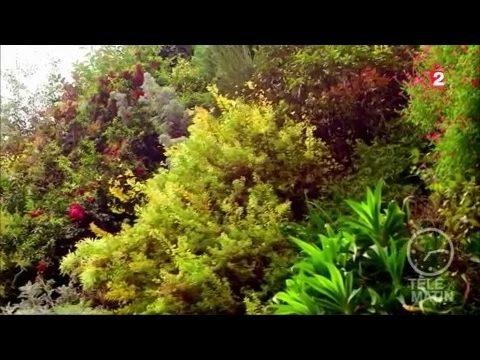 Jardin – Le jardin de Patrick Blanc