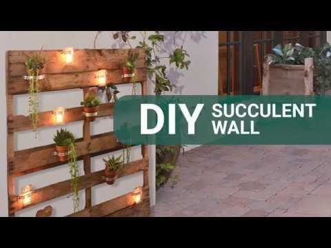 Go Vertical! Make Your Own DIY Succulent Wall
