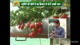 Hydroponic strawberry farming