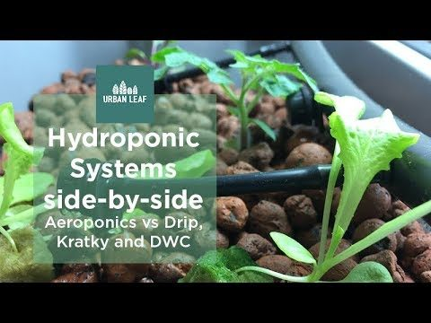 Hydroponics Systems side-by-side – Aeroponics vs Drip, Kratky and DWC