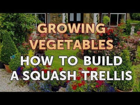 How to Build a Squash Trellis