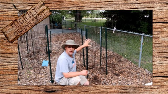 Planting Cucumber and Cantaloupe From Seed for Vertical Growing – From Seed to Harvest Video 11