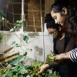 Food knowledge grows from Edmonton school's garden