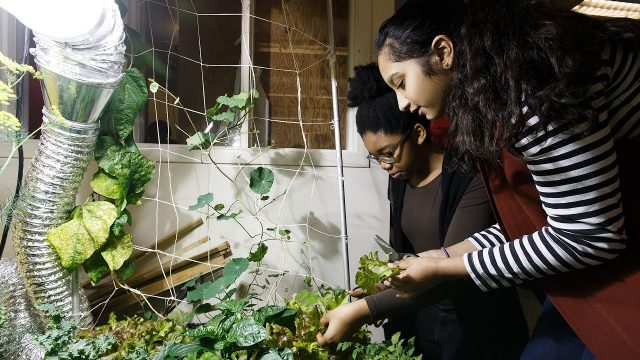 Food knowledge grows from Edmonton school's garden