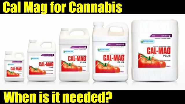 Using Calmag for cannabis.  Cannabis vlog 014