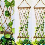 money plant/ money plant growing style/money plant wall decor/organic garden