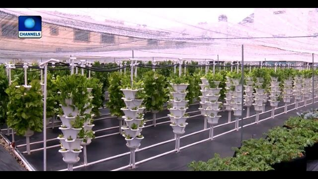 Young Nigerian Adopts Hydroponics Farming Methods In Lekki Pt.1 |Earthfile|