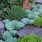 10 Attractive outdoor succulent garden ideas